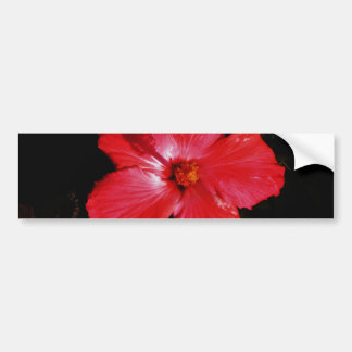 Hot Pink Red Hibiscus flower on Black Bumper Stickers