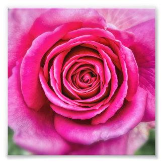 Hot Pink Rose Photo Print