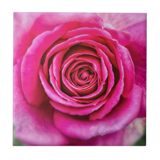 Hot Pink Rose Tiles
