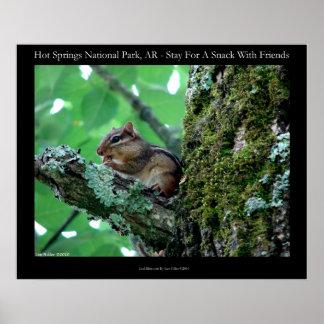 Hot Springs National Park, AR Chipmunk Snack Print