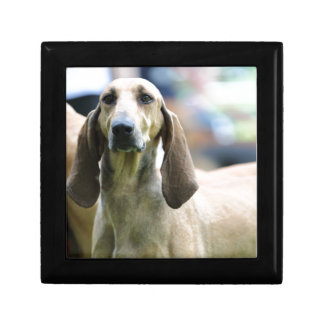 hound Italian short-haired Gift Boxes