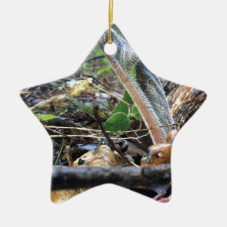 Hound's Tongue Sproutling Ceramic Star Ornament
