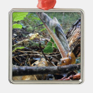 Hound's Tongue Sproutling Silver-Colored Square Ornament