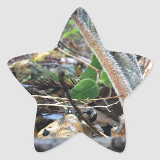 Hound's Tongue Sproutling Star Sticker