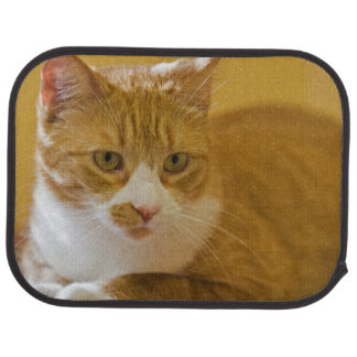 House cat car liners