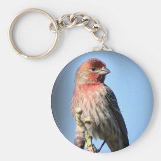 House Finch Basic Round Button Keychain