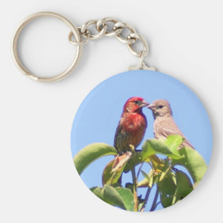 House Finch Couple Basic Round Button Keychain