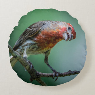 House Finch Home Decor and Accessories Round Pillow