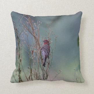House finch on a summer evening throw pillow