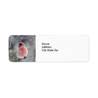 House Finch Return Address Label