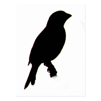 House Finch silhouette Postcard