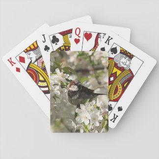 House sparrow and spring blossoms playing cards
