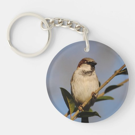 House Sparrow Blue Background Acrylic Key Chains