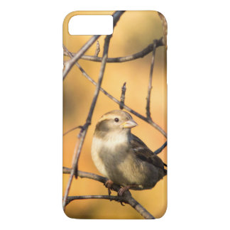 House Sparrow In Defiance, Ohio, USA iPhone 7 Plus Case