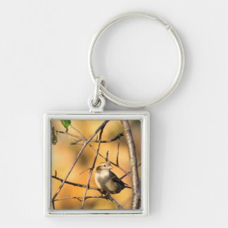 House Sparrow In Defiance, Ohio, USA Silver-Colored Square Keychain