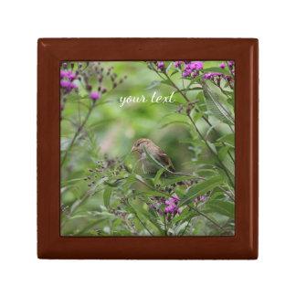 House sparrow in the garden gift box