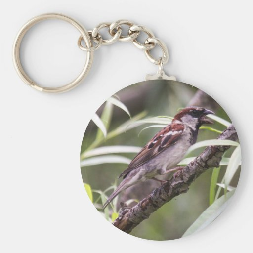 House Sparrow Keychains