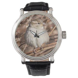 House Sparrow Watch