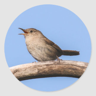 House Wren Classic Round Sticker