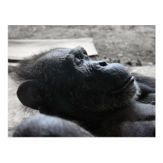 Houston Zoo Postcard