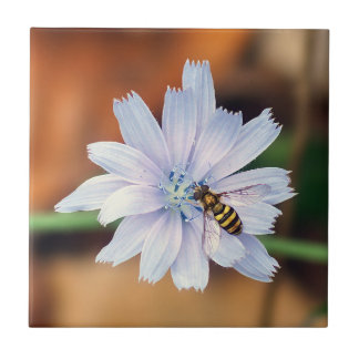 Hover Fly on Chicory Ceramic Photo Tile