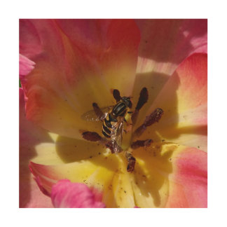 Hoverfly in a Tulip, Wood Print. Wood Wall Art