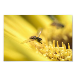 HOVERFLY ON A DAISY by Michelle Diehl Photo Print