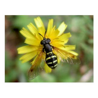 Hoverfly postcard - Chrysotoxum festivum