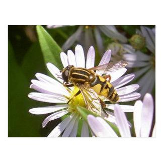 Hoverfly Postcard - Helophilus