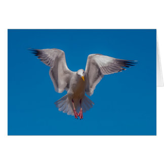 Hovering Gull Greeting Card