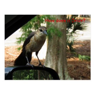 How Does it Drive Postcard