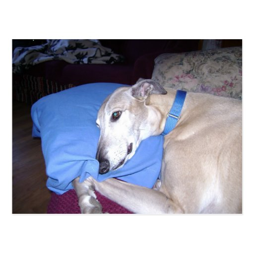 How Every Greyhound should Live Post Cards