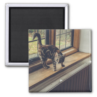 How much is that Kitty in the Window? Magnet