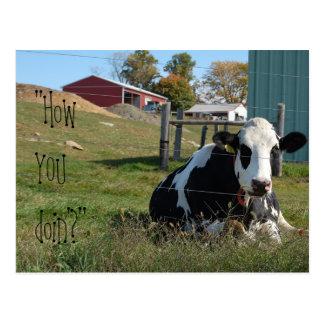 """How YOU doin'?"" cow postcard"