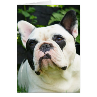 Howgillhounds cards French Bulldog Susan