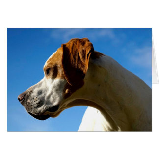Howgillhounds cards Pointer Head
