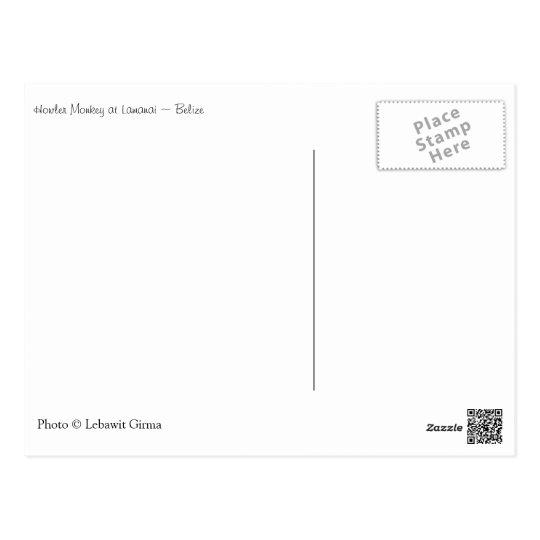 Howler Monkey, Belize Postcard