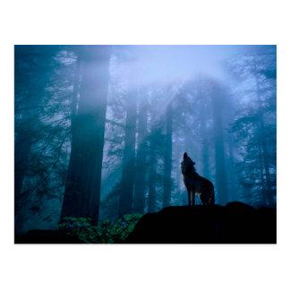 Howling wolf - wild wolf - forest wolf postcard