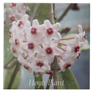 Hoya Plant Floral Tile