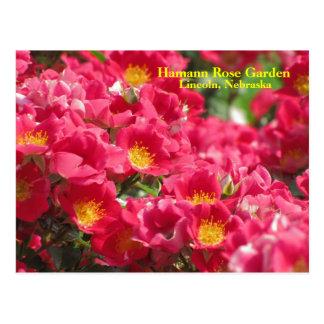 HRG Carefree Spirit Rose Postcard #315n  0315
