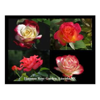 HRG Collage of roses Postcard #2Y  02