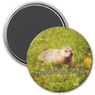 Hug a groundhog today magnet