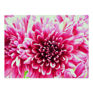huge chrysanthemum pink flower canvas poster