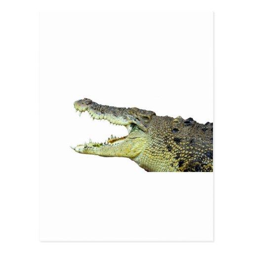 Huge crocodile jaws wide open postcard