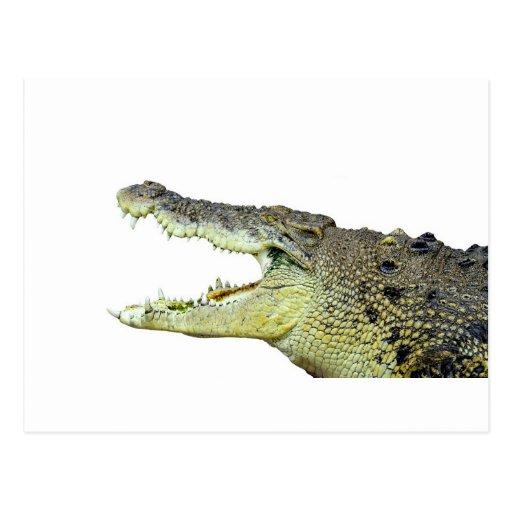 Huge crocodile jaws wide open postcards