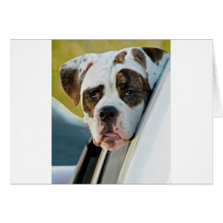 Huge Spotted Dog Looking Out Car Window Card