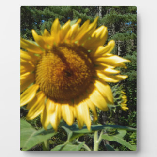 Huge Sunflower Plaque