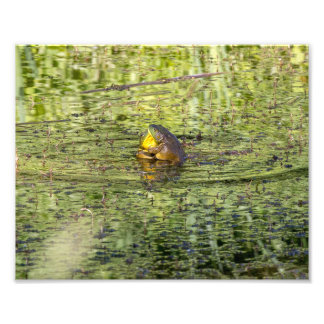 Hugging Frogs Photo Print