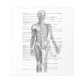 Human Anatomy Chart Notepad