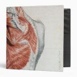 Human Anatomy; Muscles of the Torso and Shoulder Vinyl Binder